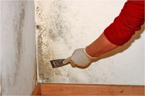 боремся с плесенью на стенах