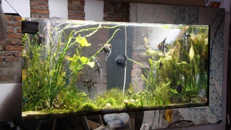Встраиваемый аквариум фото