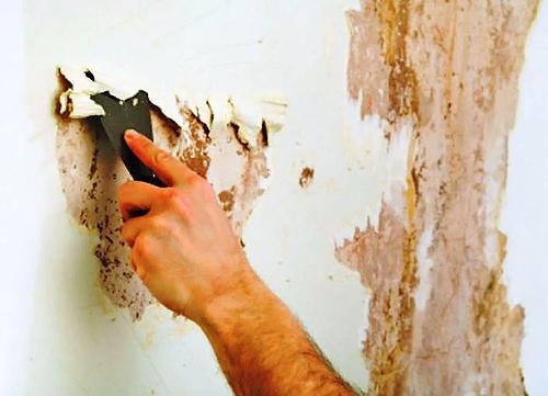 чем обработать стены с плесенью